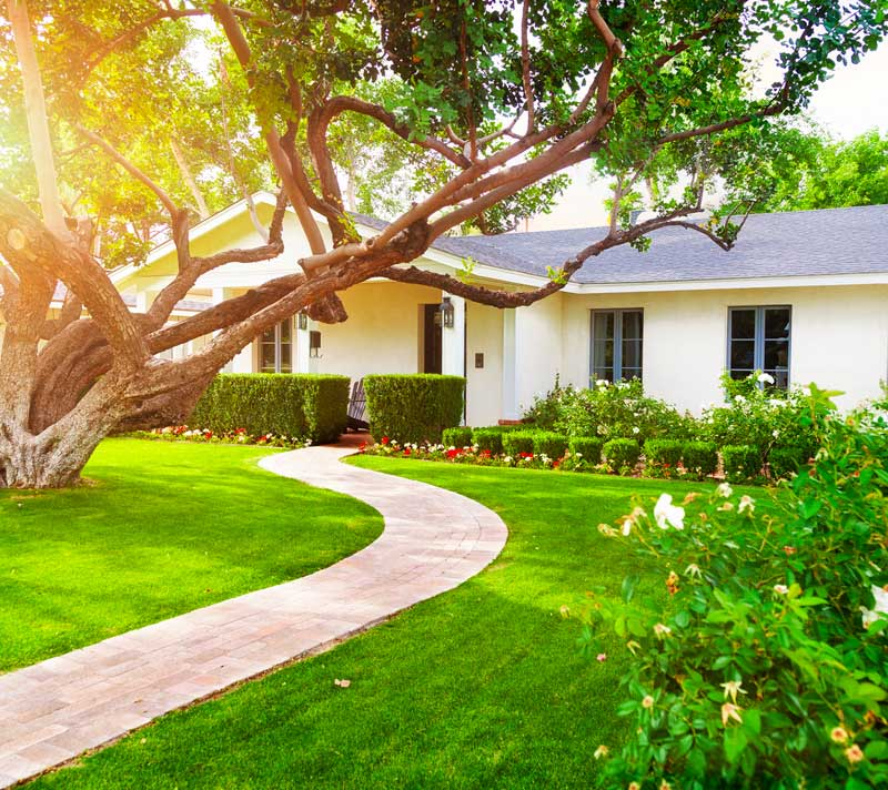 What Can Tree Pruning do for you?
