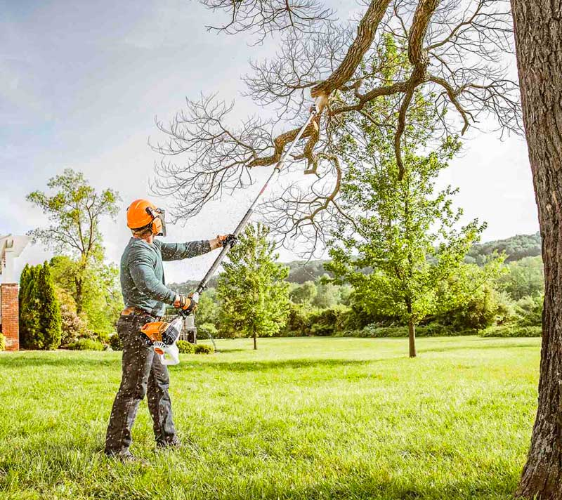 What Can Family Tree Service do for you?
